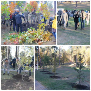 Пілотна акція з висадки дерев восени 2015 року